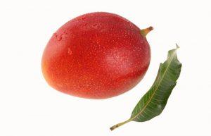 Mango Cultivars - Kent