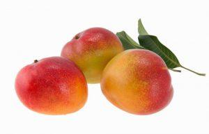 Mango Cultivars - Shelly