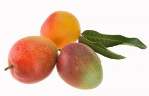 Mango Cultivars - Tommy Atkins